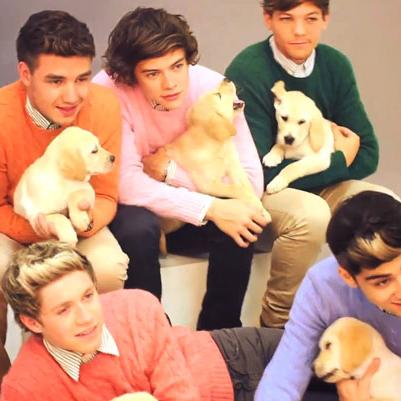 9 GIFs of One Direction cuddling up to puppies