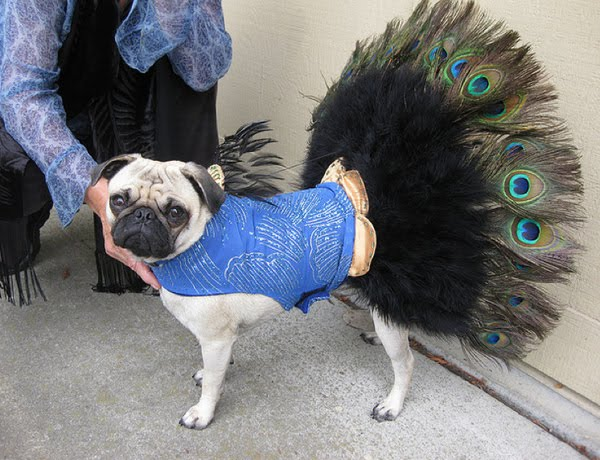 & 13 Pugs in Costumes gallery | smooth