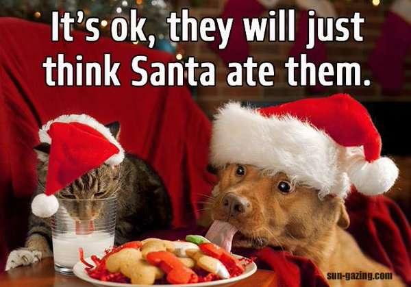 The best Christmas memes we've seen this year   Nova 969